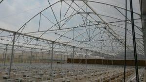 سازه-گلخانه-پلاستیکی-3
